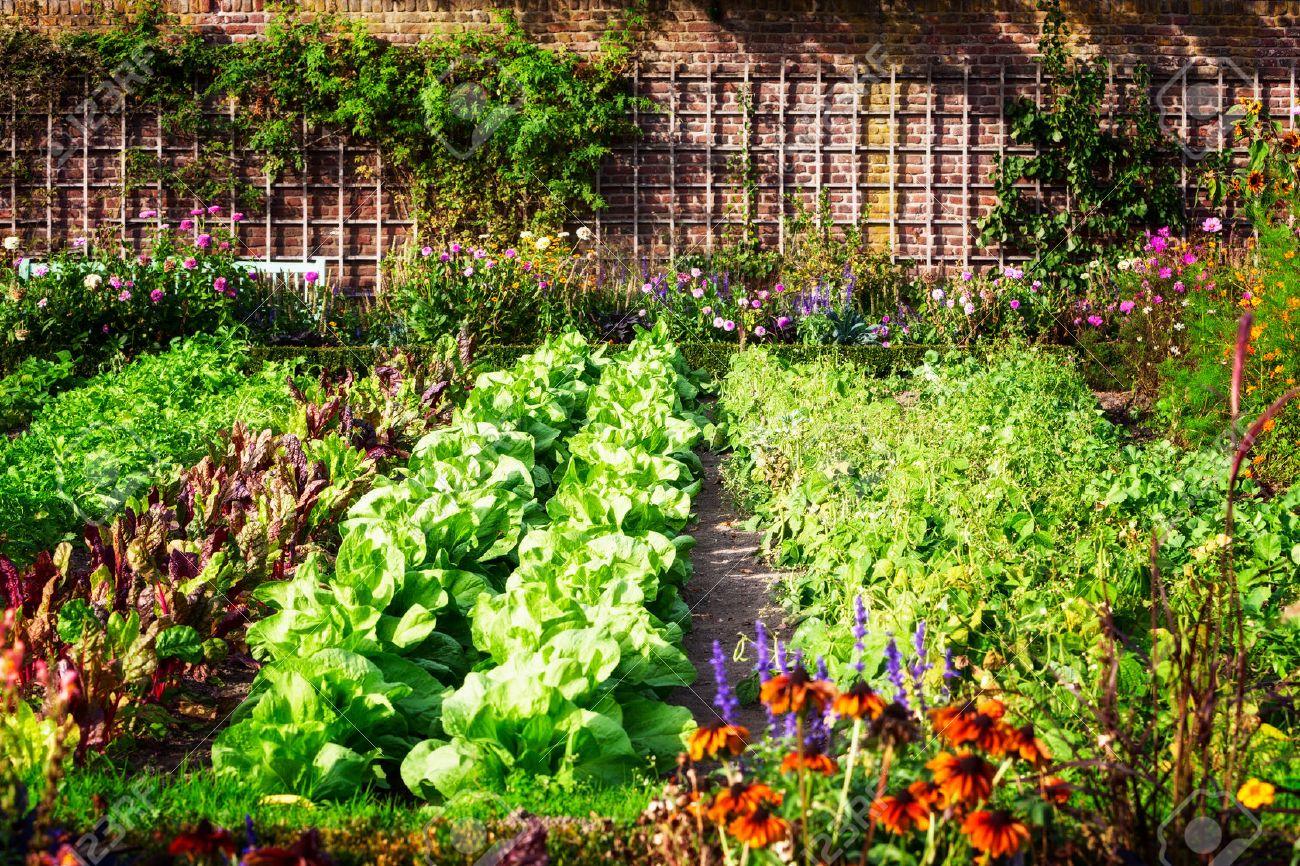 фото растений сажаемых в садоводствах места тоже очень