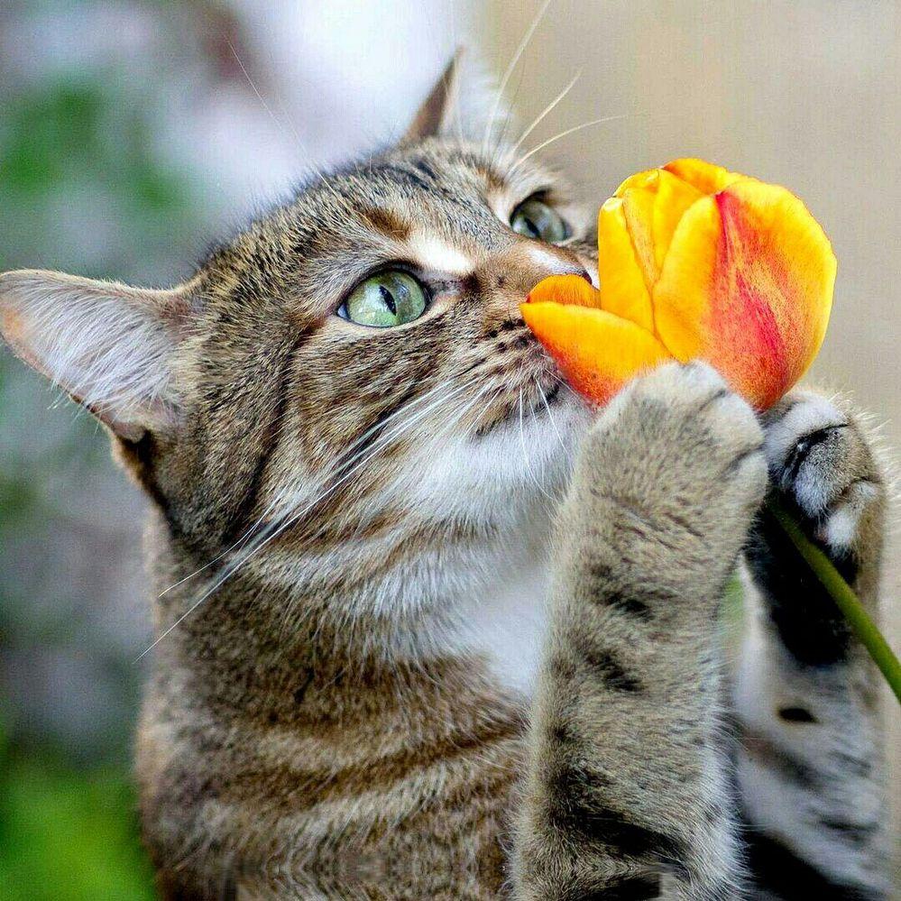Сохранить тюльпаны в вазе на дольше - 6 простых советов!