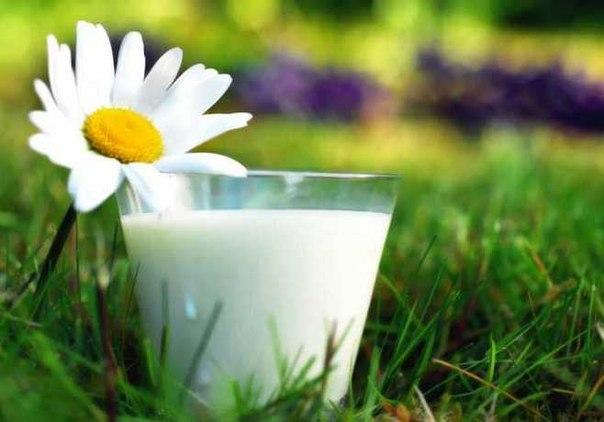 Как я использую удобрение из молока, чтобы получить максимальный урожай