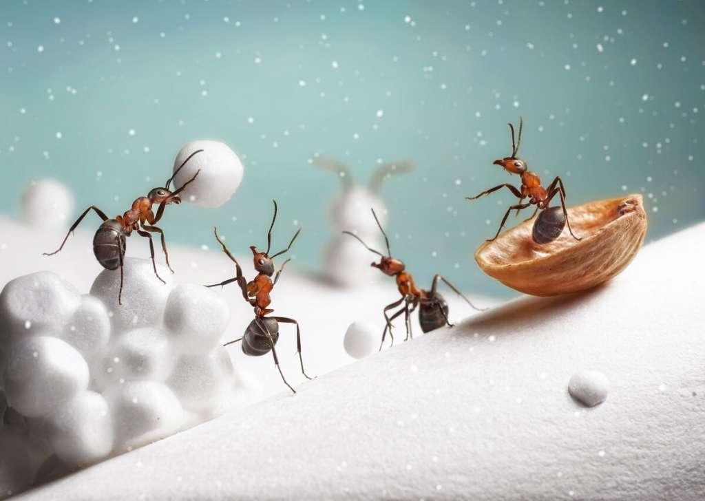Почему муравьи любят сахар? А если предложить им мед?