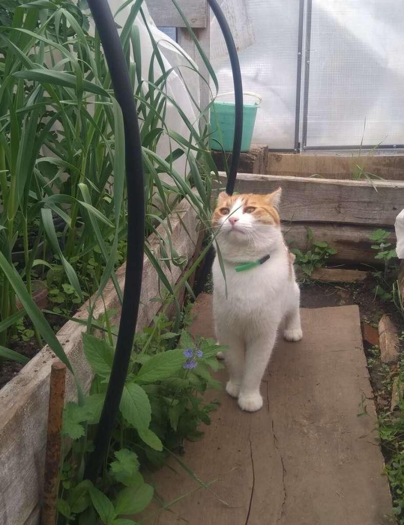 Почему коты едят траву? – 4 главные причины