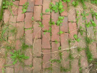 Уксус с солью от сорняков – мощное средство, проверенное временем