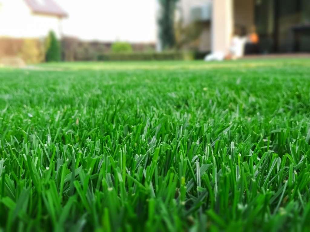 Как избавиться от одуванчиков на газоне? – 4 простых шага к чистому газону