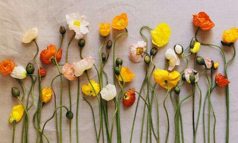 Засушенные объемные цветы.