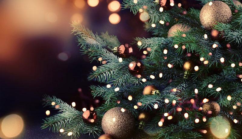 Пышные веточки елки в новогодних огнях. Как правильно ухаживать за елкой.