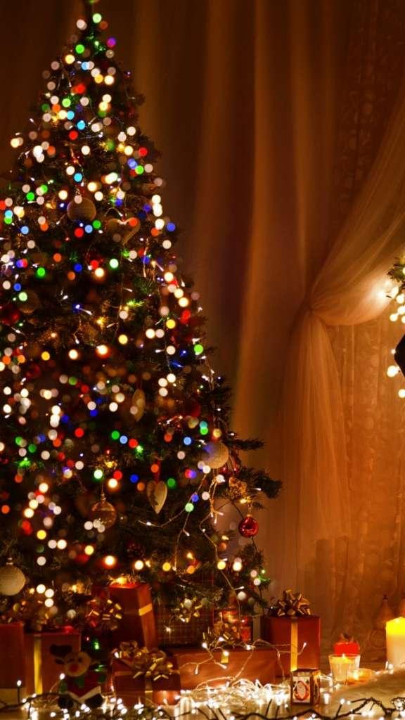 Новогодняя елка в квартире. Как ухаживать за елкой в домашних условиях.