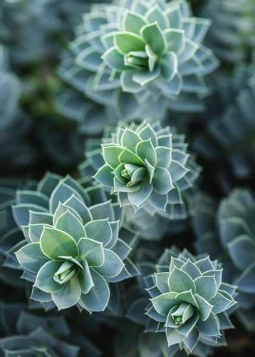 Зеленые суккуленты быстро растут.
