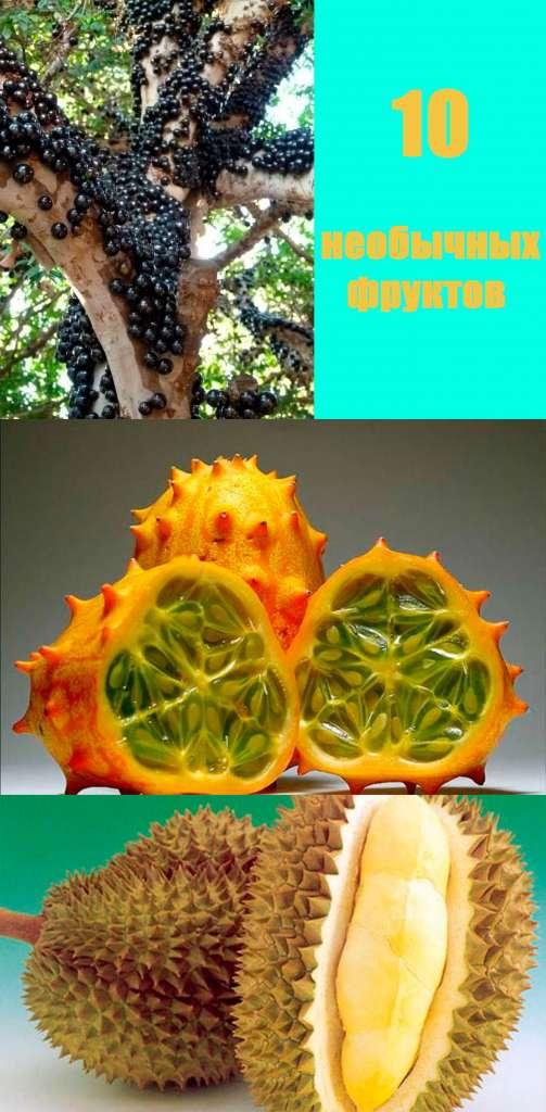 Жаботикаба, кивано, дуриан - список необычных фруктов.
