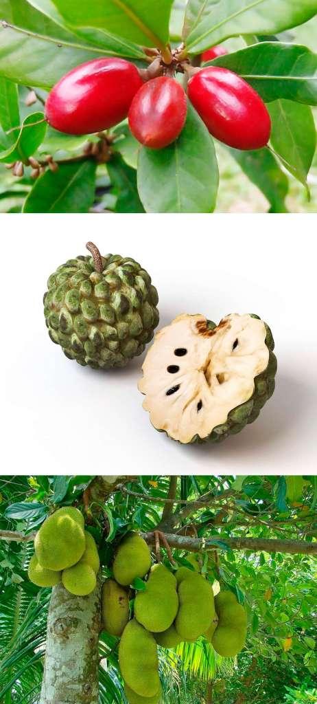Путерия сладковатая, черимойя, джекфрукт - список необычных фруктов.