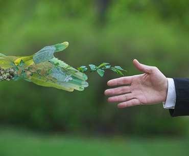 Рука растения тянется к человеческой. Растения удачи.