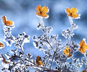Февральские цветы в снегу.