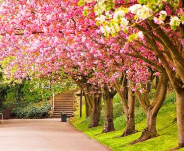 Дорожка в саду с ароматными деревьями.