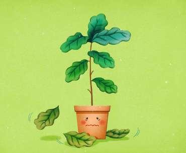 Рисунок - почему у комнатных растений опадают листья.