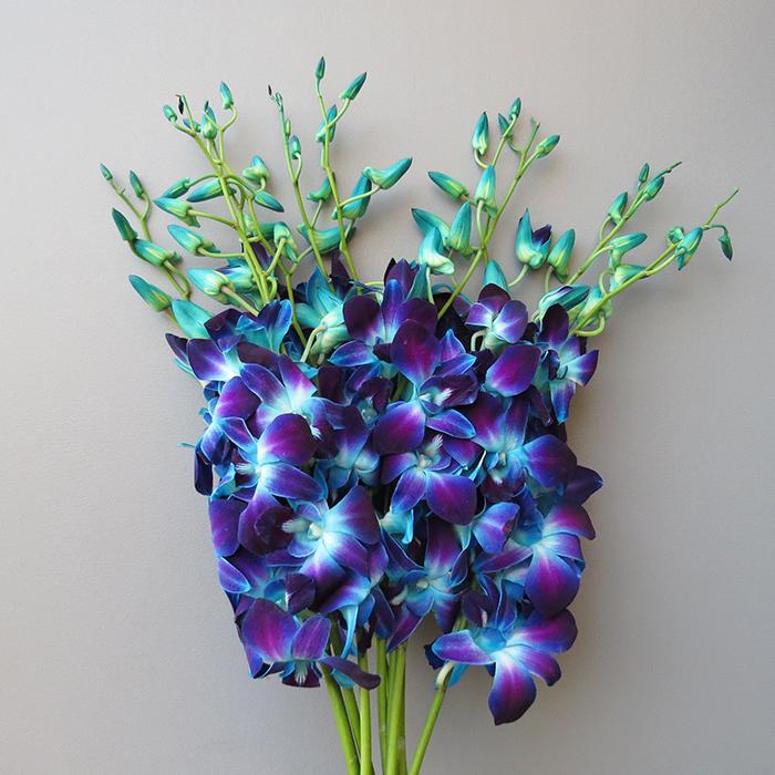 Фиолетово голубая орхидея. Вода для полива орхидеи. Какой водой поливать орхидею.