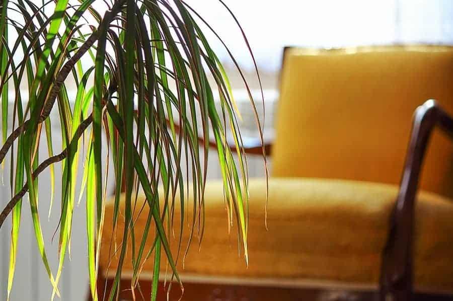 Листья на солнце - почему у комнатных растений опадают листья.