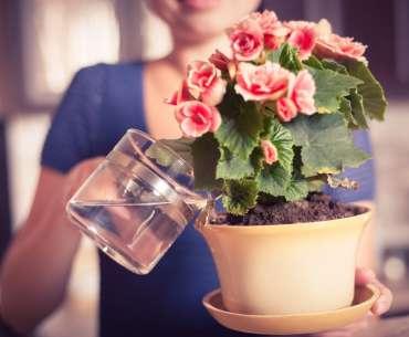 Девушка поливает цветы - какой водой поливать цветы и комнатные растения?