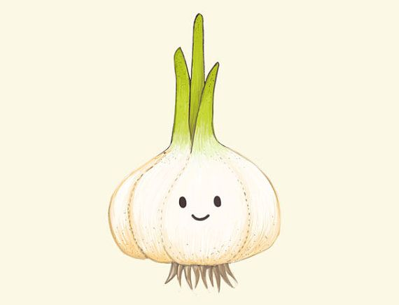Векторное изображение чеснока. Что посадить после чеснока