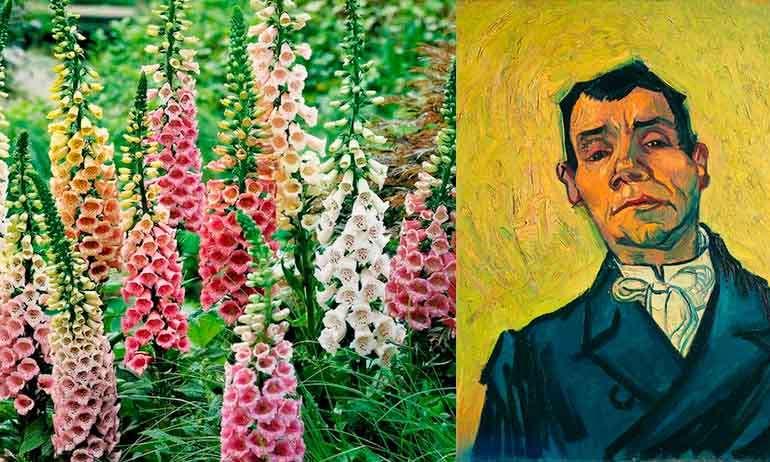 Опасная наперстянка повлияла на картины Ван Гога.