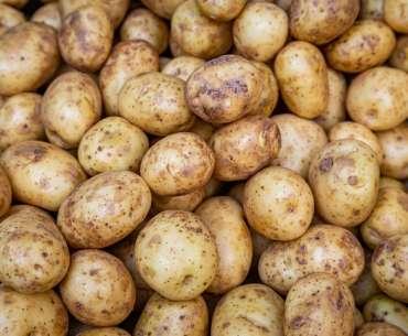 Что сажать после картошки - обильный урожай.