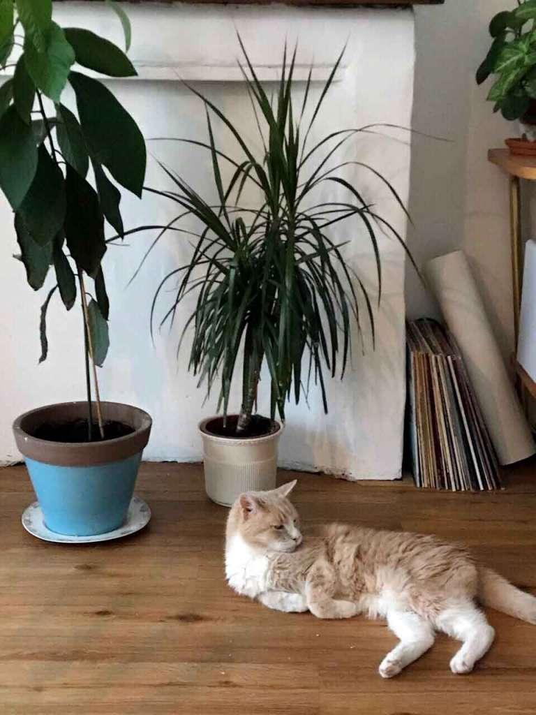 Довольный кот и цветы. Почему кот копает землю в горшках и что с эти делать.