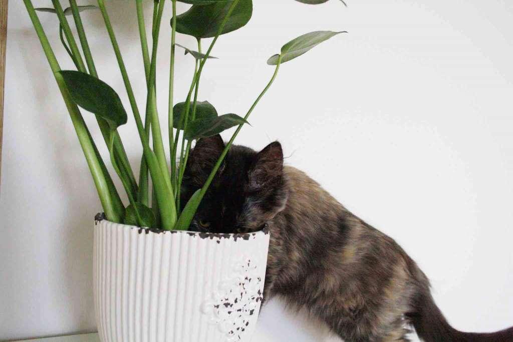 Кот роется в цветах. Почему кот копает землю в цветах и что с эти делать.
