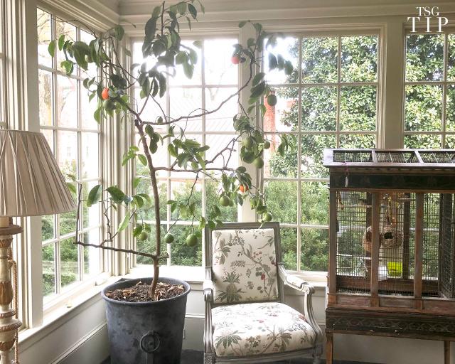 Какие фрукты растут быстрее всего в квартире.