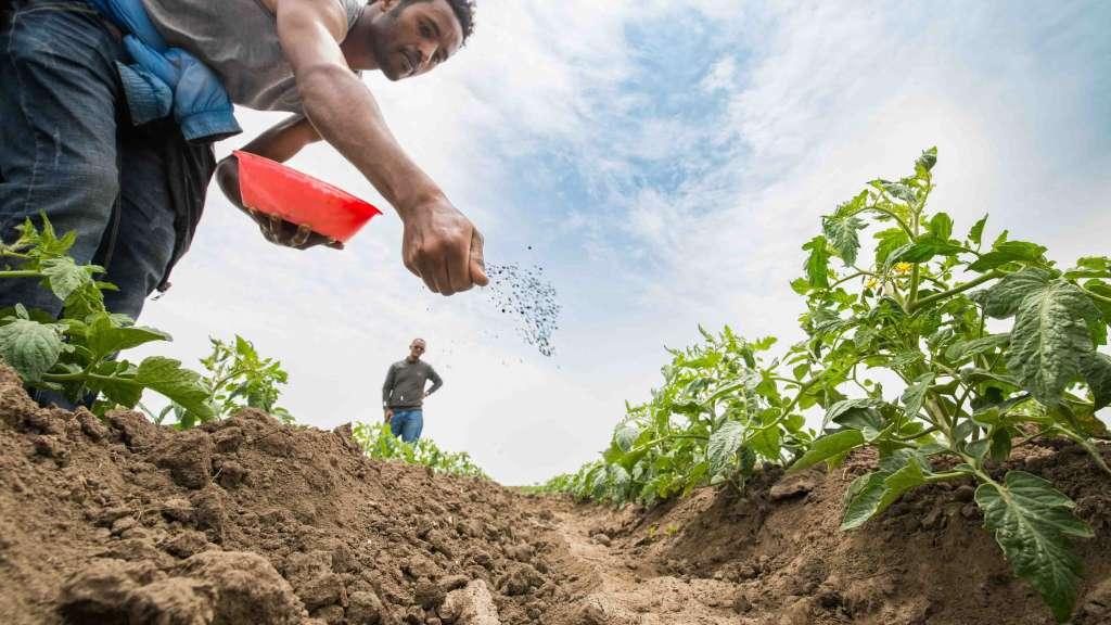 Какие удобрения нужны весной на огород?
