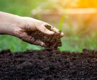 Органические и минеральные удобрения нужны весной на огород.