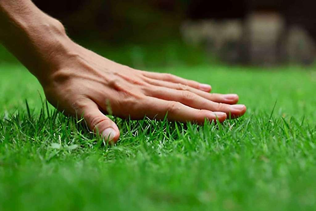Уход за искусственным газоном - всегда безупречная поляна.