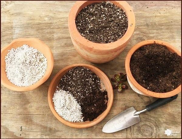 Почва для суккулентов - как выбрать или смешать дома.