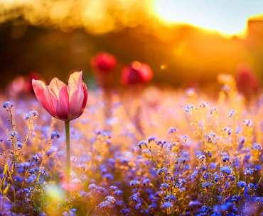 Майские цветы на солнце.