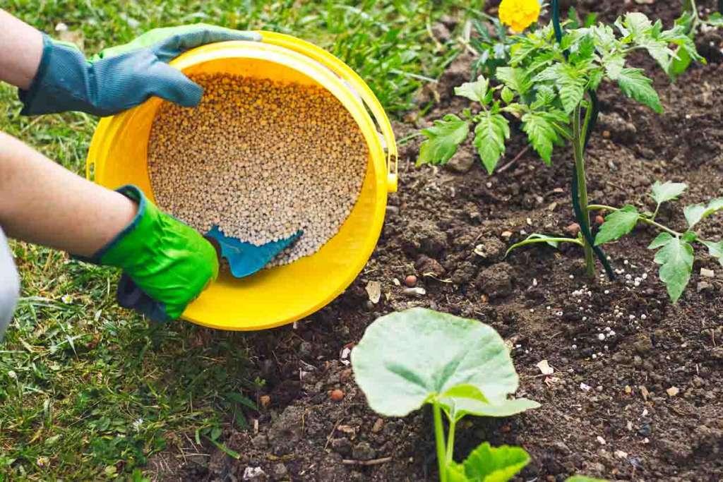 Как вносить минеральные удобрения весной на огород.