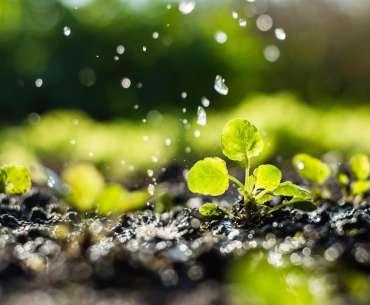 Какой водой поливать рассаду на огороде.